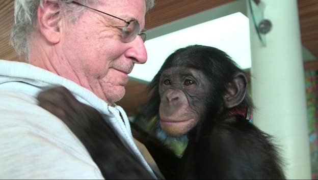 N.Y. appellate court considers rights case for chimpanzees